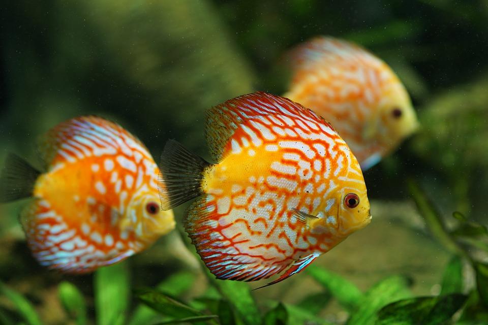 Aquariophilie melila jardin for Animalerie poisson